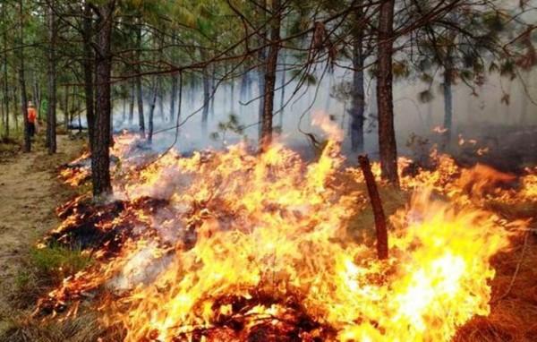 Incendio arrasa con más de 300 hectáreas en sur de Veracruz