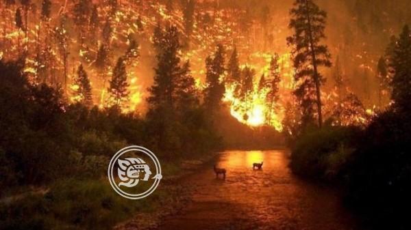 El Amazonas arde y el mundo pide salvar el pulmón del planeta