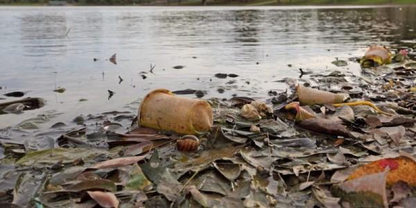 Aguas negras contaminan y afectan productos marinos