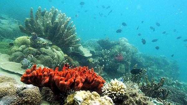 Preparan búsqueda de 12 nuevos arrecifes en el Golfo de México