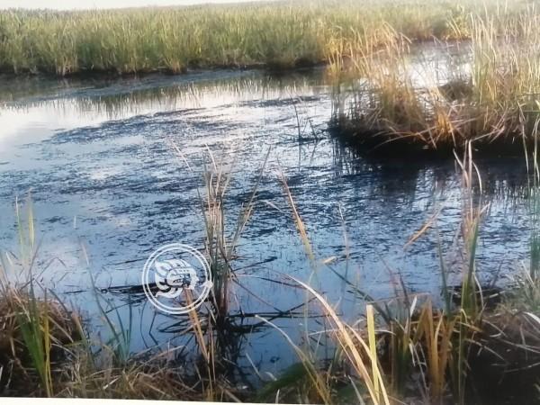 Derrame de combustóleo daña lagunas en Cosoleacaque; Pemex omiso
