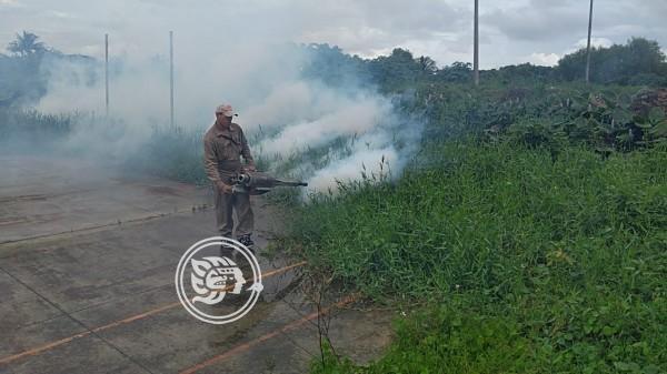 Inmune el dengue a jornadas de fumigación en Veracruz