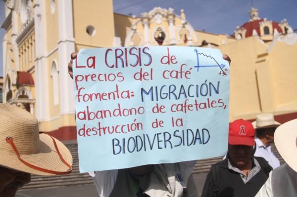 Precios bajos del café asfixian a productores de Veracruz; piden revisar esquemas