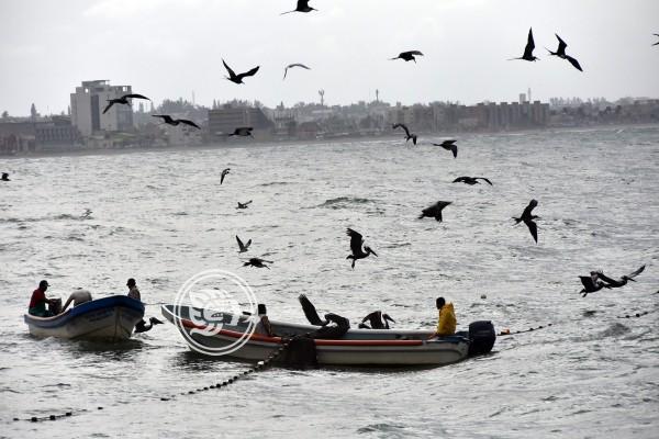 Pescadores de Veracruz prevén un complicado 2020