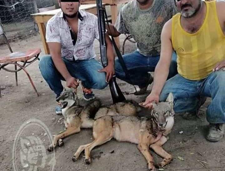 Cazadores presumen cacería de coyotes en Martínez y azuzan a redes sociales