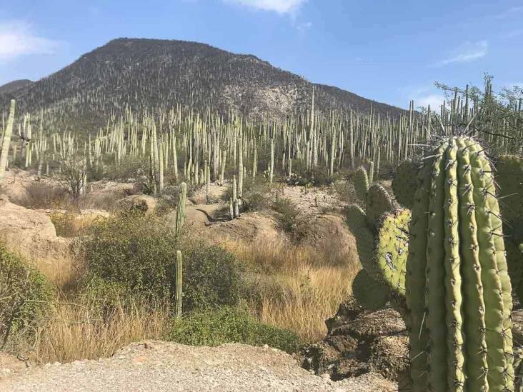 El Valle de Tehuacán-Cuicatlán ya es Patrimonio de la Humanidad