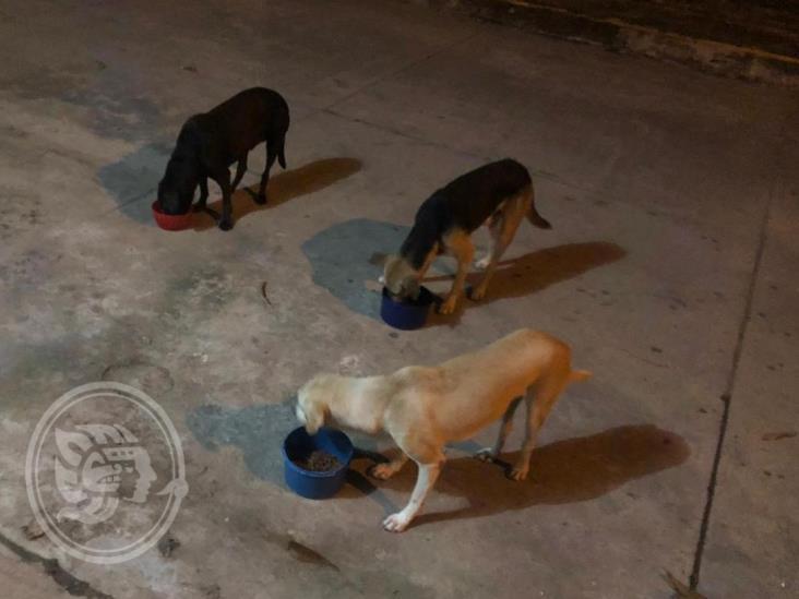 Promueven envenenamiento masivo de perros callejeros en sur de Veracruz