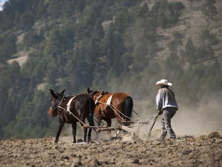 Seguros agrícolas no fueron los adecuados, afirman campesinos