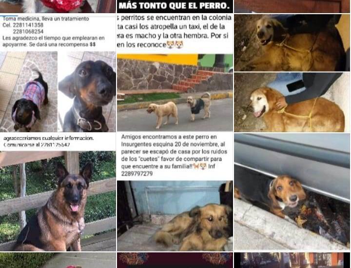 Reportan animales desaparecidos por pirotecnia en fiestas guadalupanas