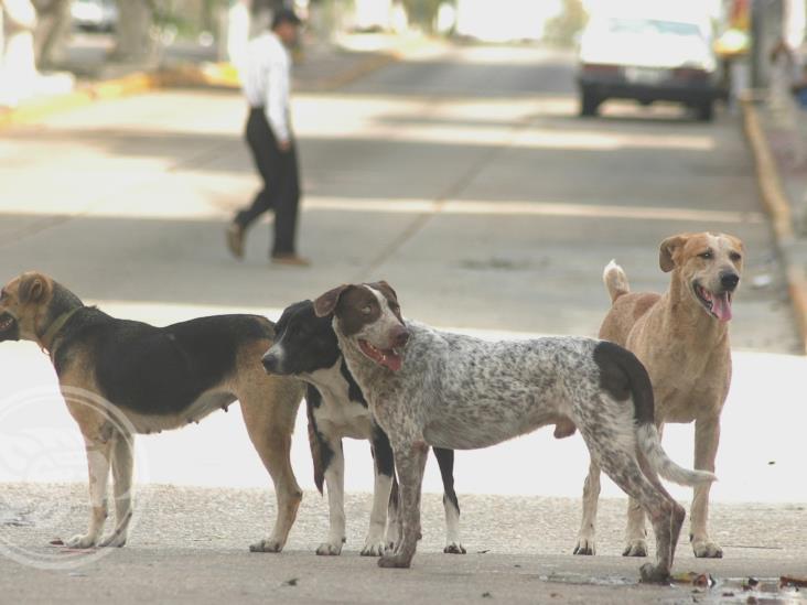 Reportan en Xalapa hasta 50 casos de maltrato animal a la semana