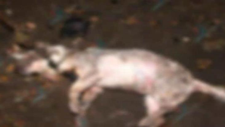Con Change.org piden justicia para perrito quemado en Papantla