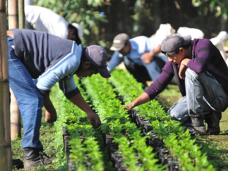 Faltan manos en el campo; paisanos que vuelvan, bienvenidos: Sedarpa
