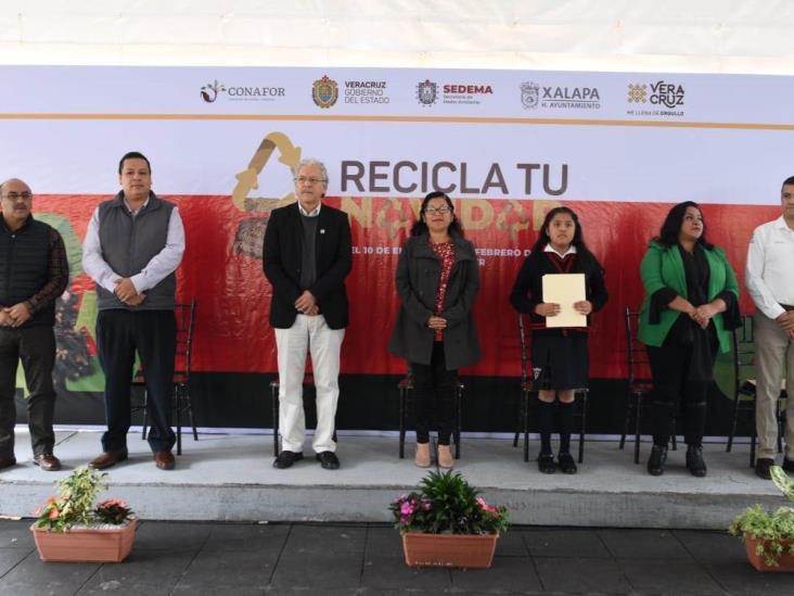 De pinos cortados en Veracruz para Navidad, sólo 15% se recicla