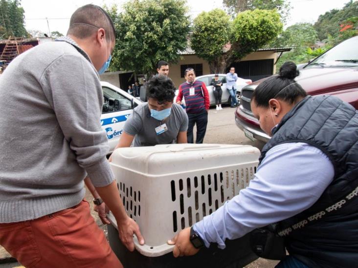 En resguardo, más de 40 animales rescatados de 'refugio' en Córdoba