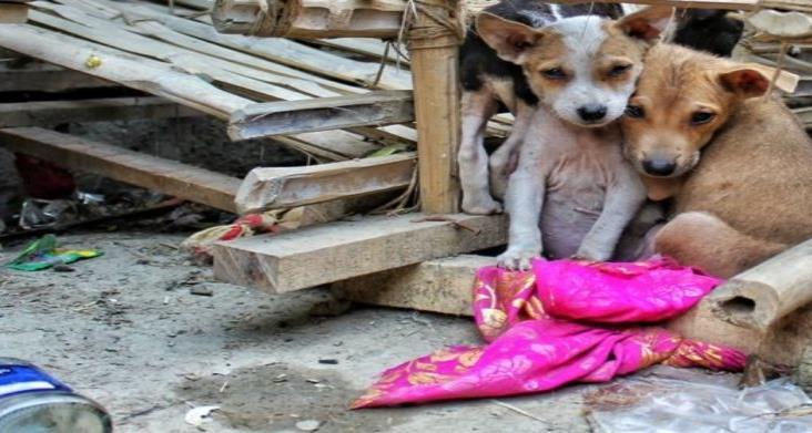 Ven desidia de la autoridad para castigar maltrato animal en Veracruz
