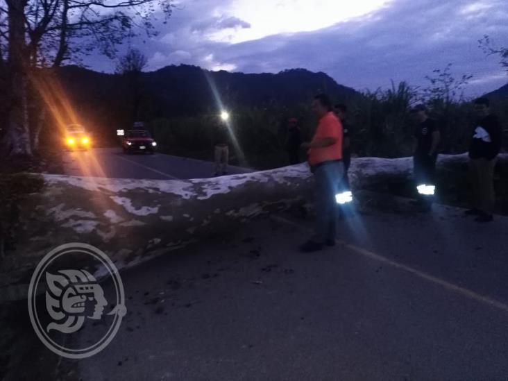 Por surada cae árbol en acceso a La Sidra; bajarán temperaturas