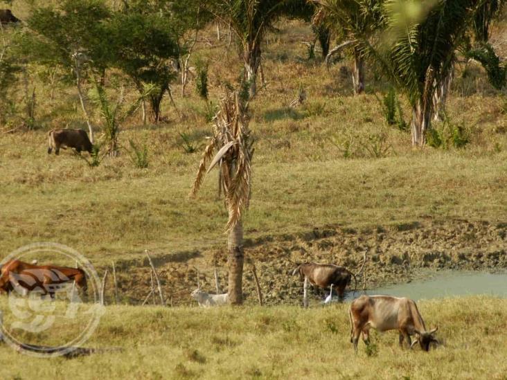 Sequía extrema en 7 municipios de Veracruz; piden cuidar el agua