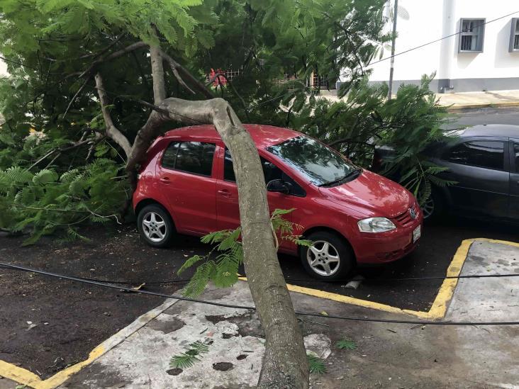 Cae árbol sobre vialidad en calles de Veracruz