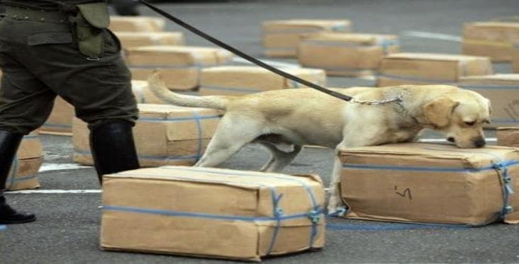 Perros detectarían droga y dinero ilícito en aduanas mexicanas