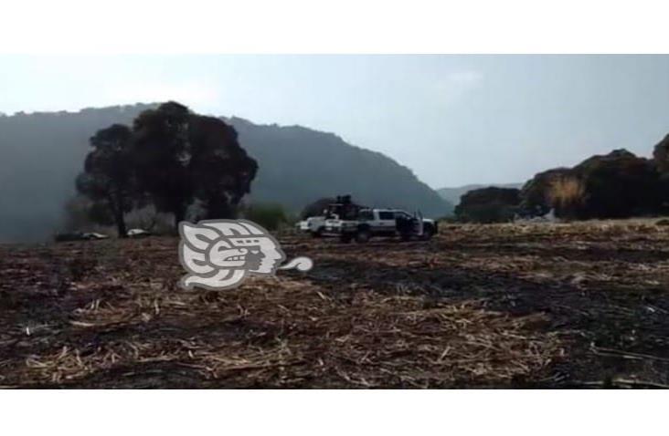 Cacería de conejos moviliza a fuerzas del orden de Amatlán