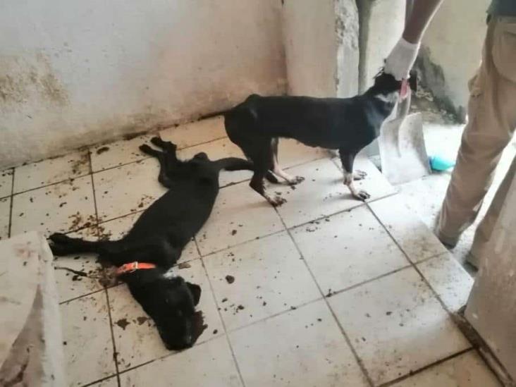 Aflora crueldad animal en Veracruz; abandonan a perros para que mueran de hambre