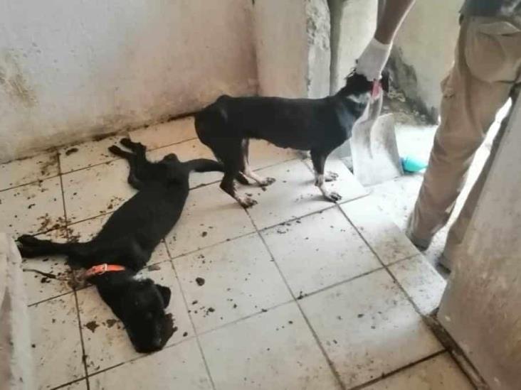 Rescatan a dos perritos encerrados en vivienda de Veracruz